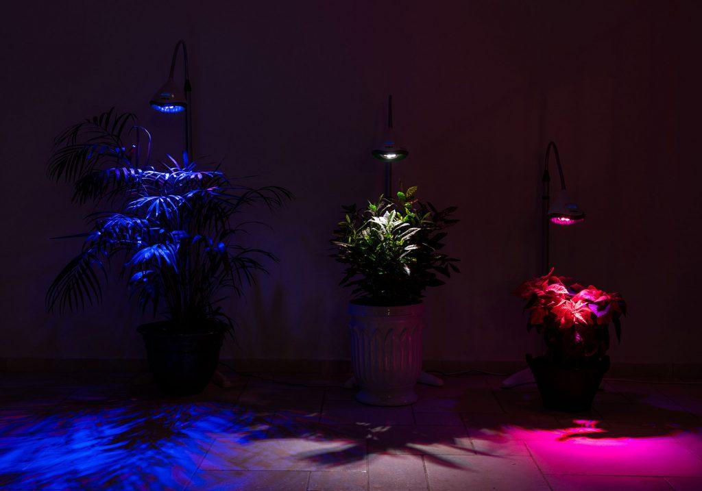 תאורה לגידול צמחים בבית - 3 צבעים