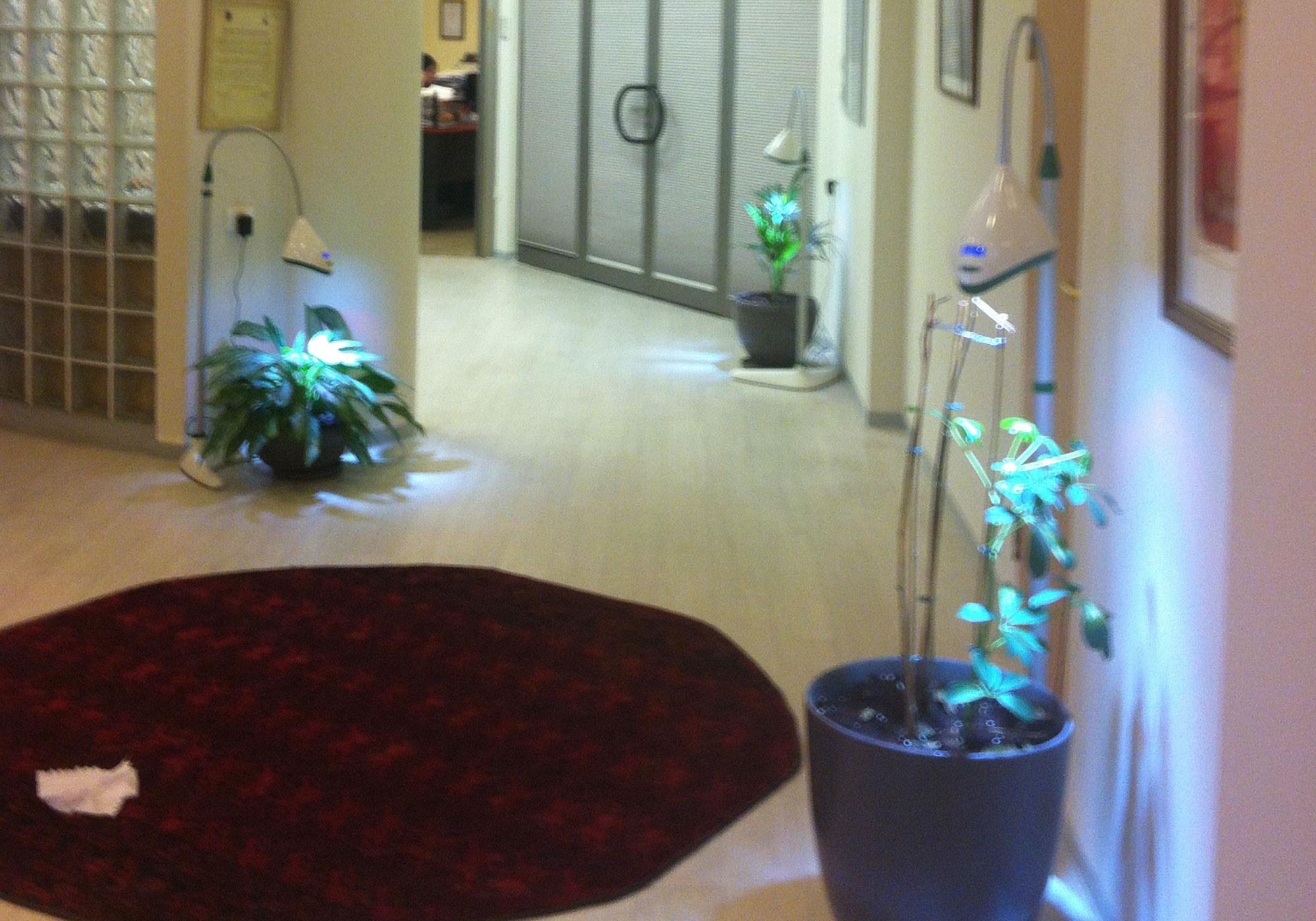 תאורה לצמחים