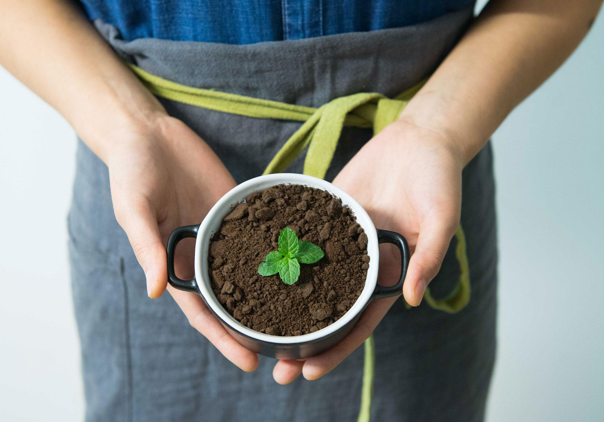 לגדל בבית בעזרת וקה סאן - תאורה חכמה לצמחים