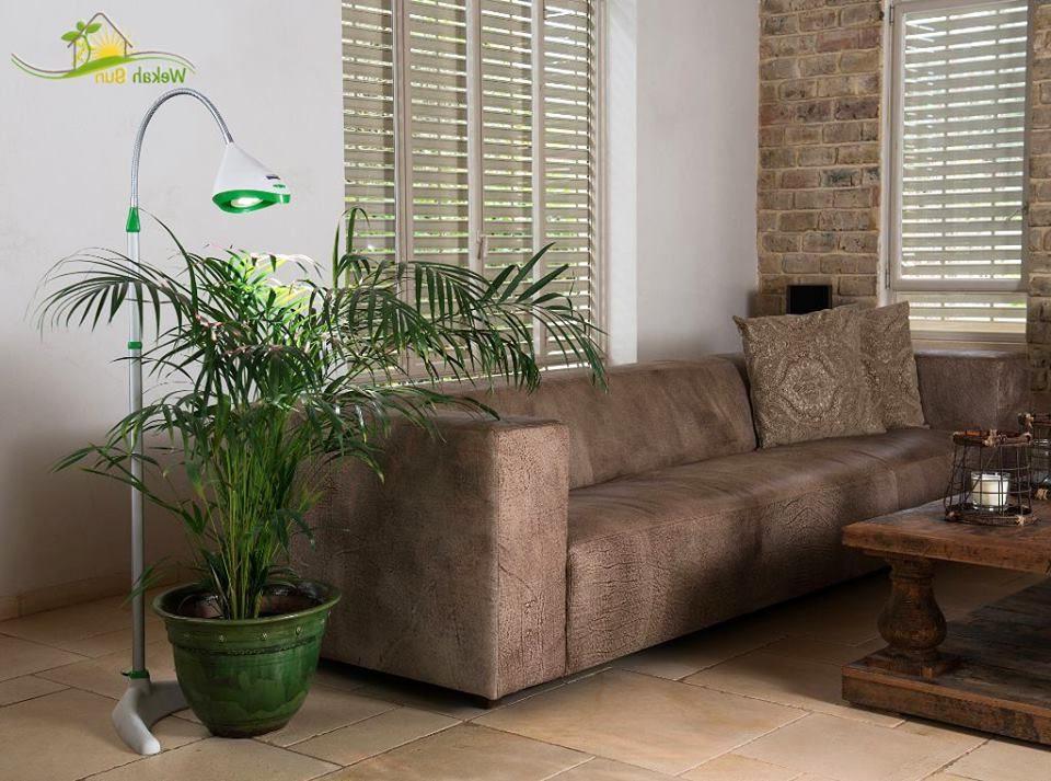 צמחיה ירוקה ויפה אצלכם בסלון בעזרת וקה סאן