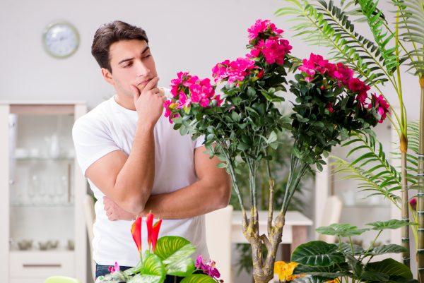 לגדל צמחים בבית כמו בטבע תאורה לצמחים