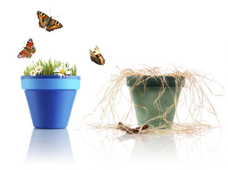 להציל את הצמח